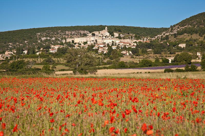 Provence_Mohn