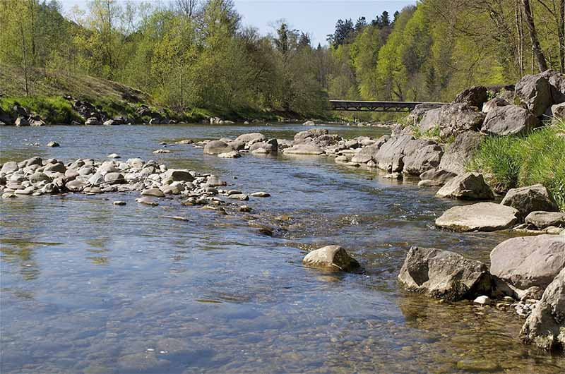 Sihlwald mit Fluss Sihl